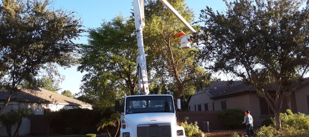 phoenix tree removal service