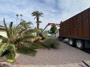tree removal and maintenance service in phoenix, az