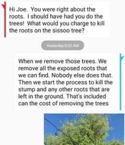text about removing the roots along with the tree of the sissoo tree