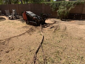 sissoo tree root removal